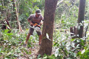 Xử phạt vi phạm hành chính lĩnh vực khai thác và kinh doanh trái phép trong rừng
